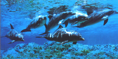 Delfini-(rosa)marini.jpg.jpg