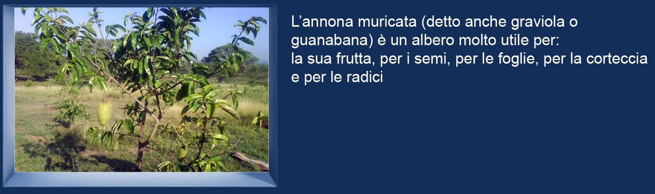 Un-albero-di-Graviola-Annona-muricata-guanabana-Soursop-99K.jpg