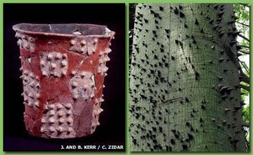 Maya1-1.jpg