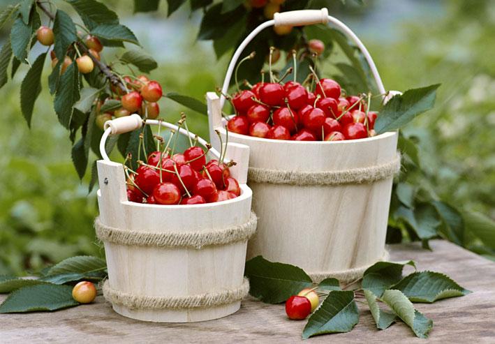 Cherry--ciliegie--86,52K.jpg
