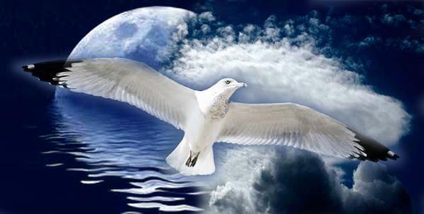 gabbiano-luna-nuvole-vento-acqua-53K.jpg
